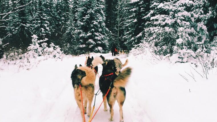 Whistler - Dog sledding-1