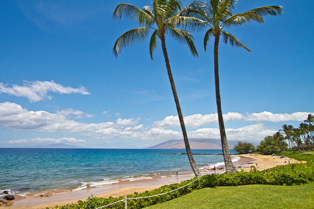 Promo-Tile-Maui-Beach-Summer-Palm-Trees-Utopian